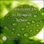 1FF5D-Lluvia-suave-en-el-Bosque-60min